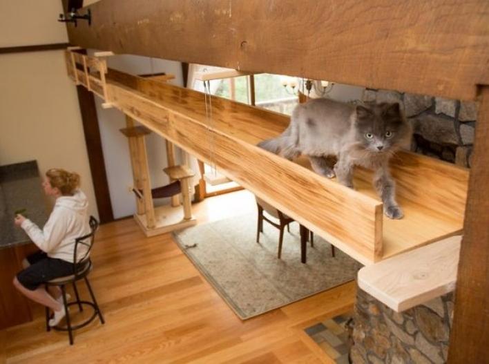 Hayvansever çift evlerini kedi sarayı yaptı